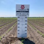 北海道契約農場の小豆が芽生えました!